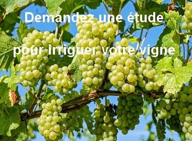 Irriguer votre vigne